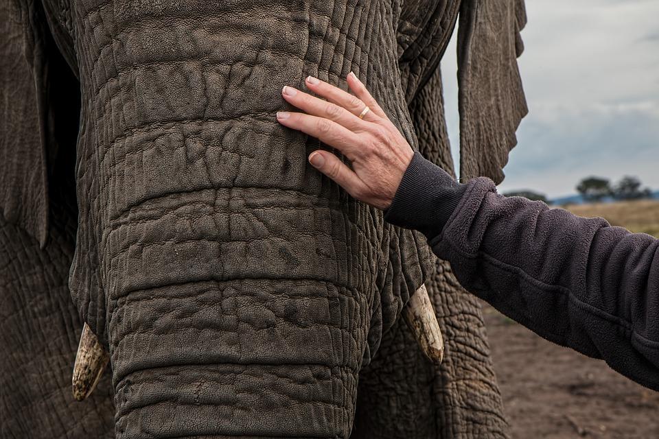 elephant-1526695_960_720