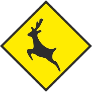 deer flying - pat dennehy